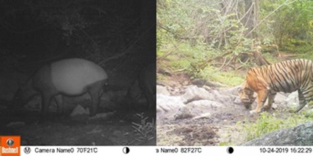 ชื่นใจ! เผยภาพสัตว์ป่า ในเขตฯ ห้วยขาแข้ง สะท้อนให้เห็นถึงความสมบูรณ์ของผืนป่า