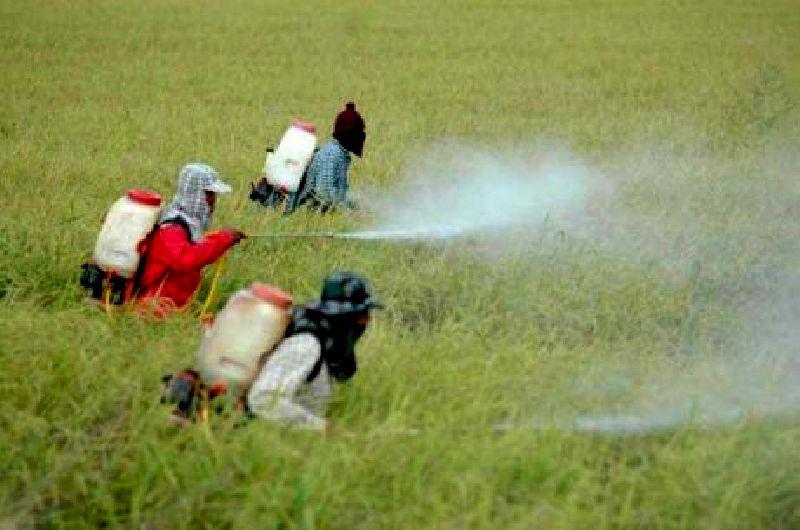 """ไม่ใช่แค่แมลงกัด!! หมอจุฬาฯ ชี้ """"สารเคมีเกษตร"""" ต้นเหตุผิวถูกทำลาย เสี่ยงติดเชื้อเนื้อเน่ายิ่งกว่า"""