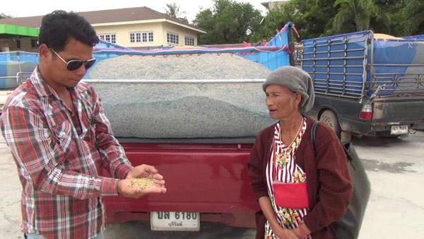 ชาวนาบุรีรัมย์ระทม! พิษภัยแล้งทำผลผลิตข้าวลดฮวบ-เมล็ดลีบ-เม็ดแดงปน ขายได้ราคาต่ำโรงสีไม่รับซื้อ