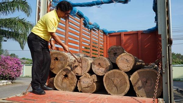 กุยบุรี เคลื่อนย้ายไม้จันทน์หอม ส่งช่างสิบหมู่ นครปฐมแล้ว