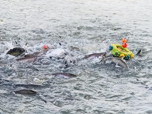 วัดดังเมืองอ่างทองไอเดียเก๋ ทำกระทงจากอาหารปลาให้ประชาชนลอย สไลเดอร์ ลงแม่น้ำ