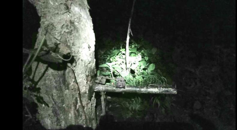 เสียงปืนสนั่นป่าแจ้ซ้อน..จนท.เหยียบกับดักหมูป่าติดลูกซองถูกยิงทะลุน่อง 2 ข้าง
