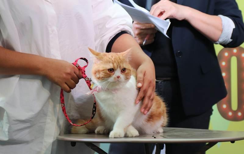 น้องไจโกะ แมวสวยสุขภาพดี