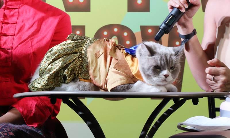 น้องนวคิง แมวไอดอลในชุดแมวนพมาศ