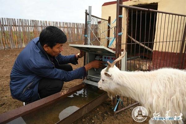 จีนเปิดตัวเทคโนโลยี 'ปศุสัตว์ดิจิทัล' เพิ่มประสิทธิภาพ-ผลผลิต
