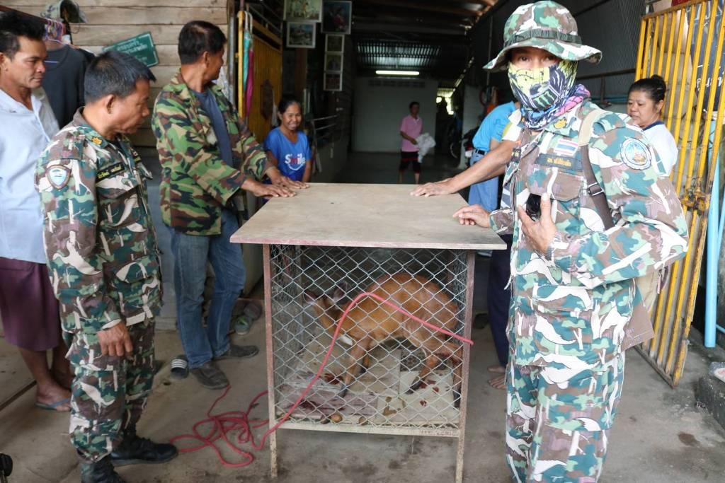เก้งหม้อหลุดป่าศรีสัชนาลัยโดนหมาไล่ตกใส่สังกะสีบาด ชาวบ้านจับแจ้ง จนท.ช่วย