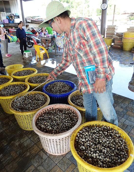 หอยแครงพร้อมส่งออกสู่ตลาด