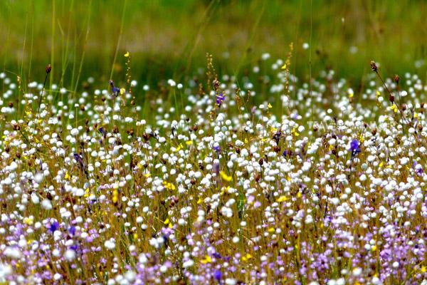 ดอกไม้ต่างชนิดพันธุ์ แต่อยู่ร่วมกันอย่างกลมกลืนสวยงาม