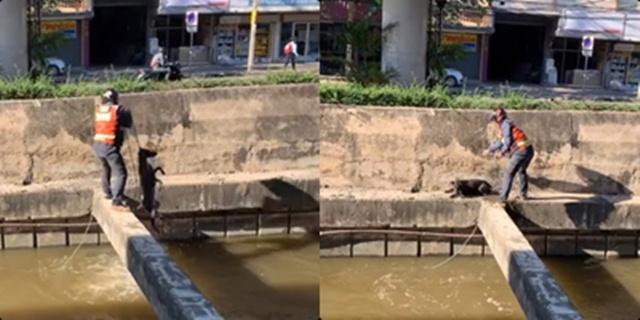 ฮีโร่!ไม่จำเป็นต้องมีพลังวิเศษ หนุ่มวินช่วยสุนัขตกน้ำสุดกำลังเพื่อให้มันปลอดภัย (ชมคลิป)