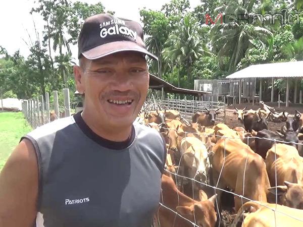 """""""มรดกฟาร์ม"""" ฟาร์มวัวพื้นเมืองผสมเลือดวัวชนมากสุดในห้วยยอด"""