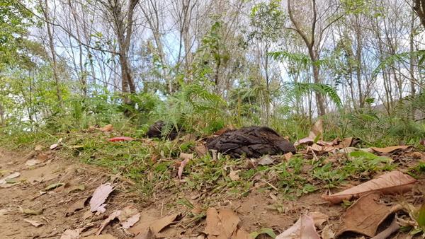 เจอตัวการ ! ด้วงจากขี้วัวเจาะต้นพญาเสือโคร่งยืนต้นตายย้ำแปลงภูลมโลยังมีลุ้นออกดอกสะพรั่ง