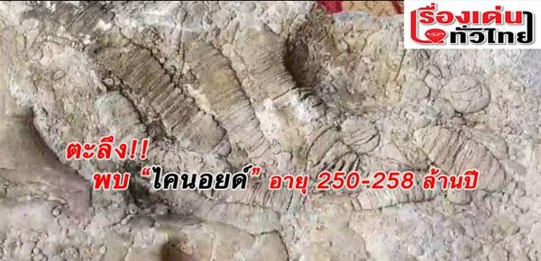 (ชมวิดีโอ) ฮือฮา!?!พบซาก พลับพลึงทะเล อายุเกือบ 300 ล้านปี ที่สระแก้ว
