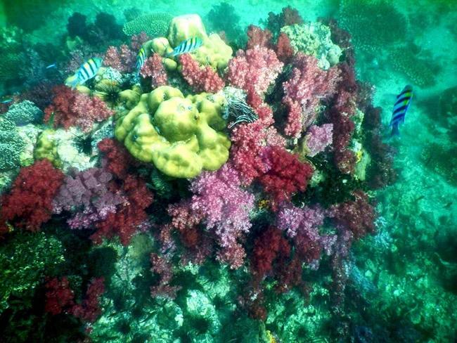 ปะการัง 7 สี ที่ร่องน้ำจาบัง