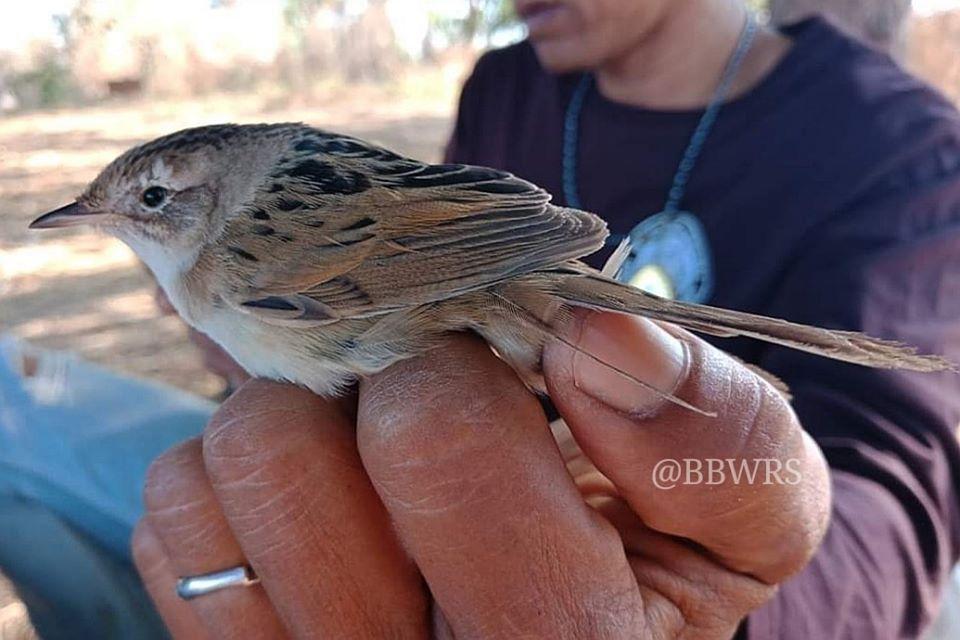 ภาพจากเพจกลุ่มงานวิจัยสัตว์ป่า Wildlife Research Division