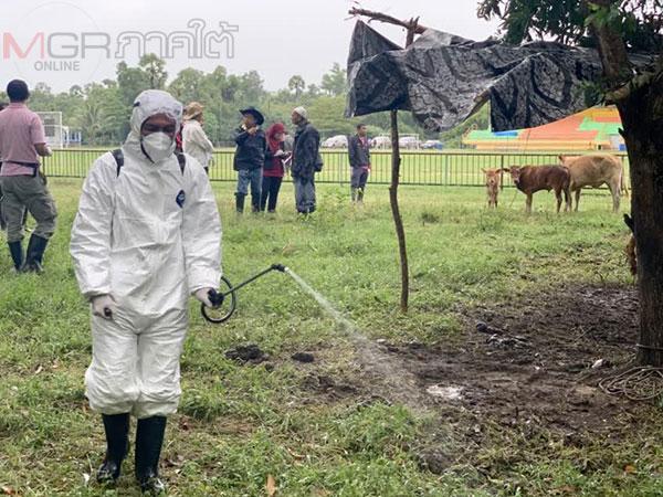ปศุสัตว์ปัตตานีคุมเข้มป้องกันและเฝ้าระวังโรคปากและเท้าเปื่อยช่วงหน้าฝนนี้