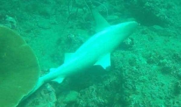 สลด! นักดำน้ำพบฉลามหูดำ 3 ตัวติดเบ็ดตายใกล้เกาะพีพี อุทยานฯขู่ ล่าสัตว์ในเขตอุทยานมีความผิด