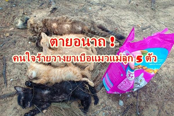 โซเชียลสุดทนรุมประณาม ! คนใจร้าย นำแมวแม่ลูก 5 ตัว ไปทิ้งริมชายหาดพร้อมวางยาเบือตายอนาถ