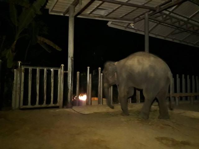 """""""ลำปางหนาวมาก"""" มูลนิธิเพื่อนช้างฯ ต้องล้อมกั้นลม-ห่มผ้า ก่อไฟให้ช้างผิง"""