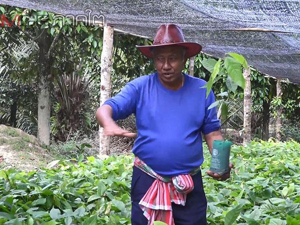 """""""นายบ้านไข่รัน"""" เปิดศูนย์เรียนรู้ชวนเกษตรกรปลูกต้นโกโก้เสริมรายได้ช่วงเศรษฐกิจแย่"""