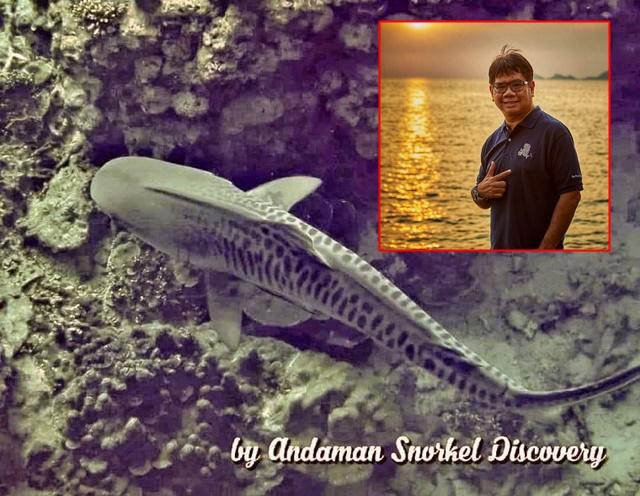 """""""ดร.ธรณ์"""" ปลื้ม พบปลาฉลามเสือ หมู่เกาะสุรินทร์ เผยสัตว์น้ำสุดหายากในทะเลไทย"""