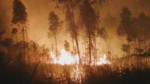 ชาวบ้านตื่นตระหนก!  ไฟไหม้เขาฉลากวันที่สามลามลงมาใกล้บ้านเรือน