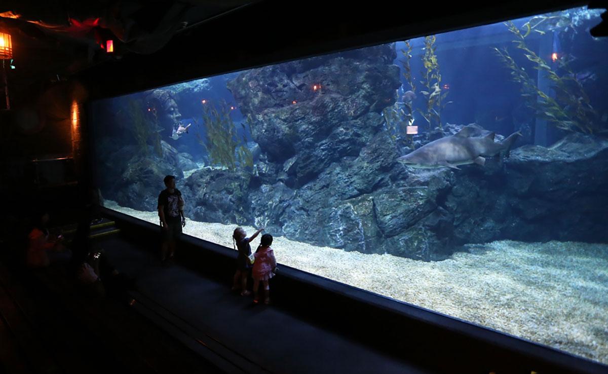 โลกใต้ท้องทะเล (ภาพจาก ซีไลฟ์ แบงคอก)