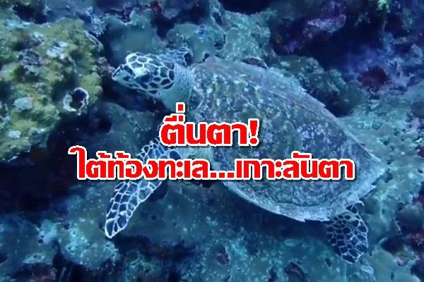 ตื่นตา! ฝูงปลานานาชนิด แหวกว่ายอวดโฉมทะเลเกาะลันตา บ่งชี้ความอุดมสมบูรณ์ของท้องทะเล