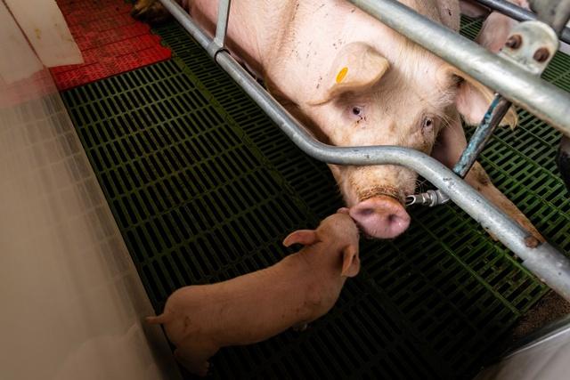 """องค์กรพิทักษ์สัตว์แห่งโลก ชูมาตรการเร่งด่วนช่วยเหลือสวัสดิภาพสัตว์  ช่วยลดผลกระทบของภัยร้ายจากเชื้อ """"แบคทีเรียดื้อยา"""""""