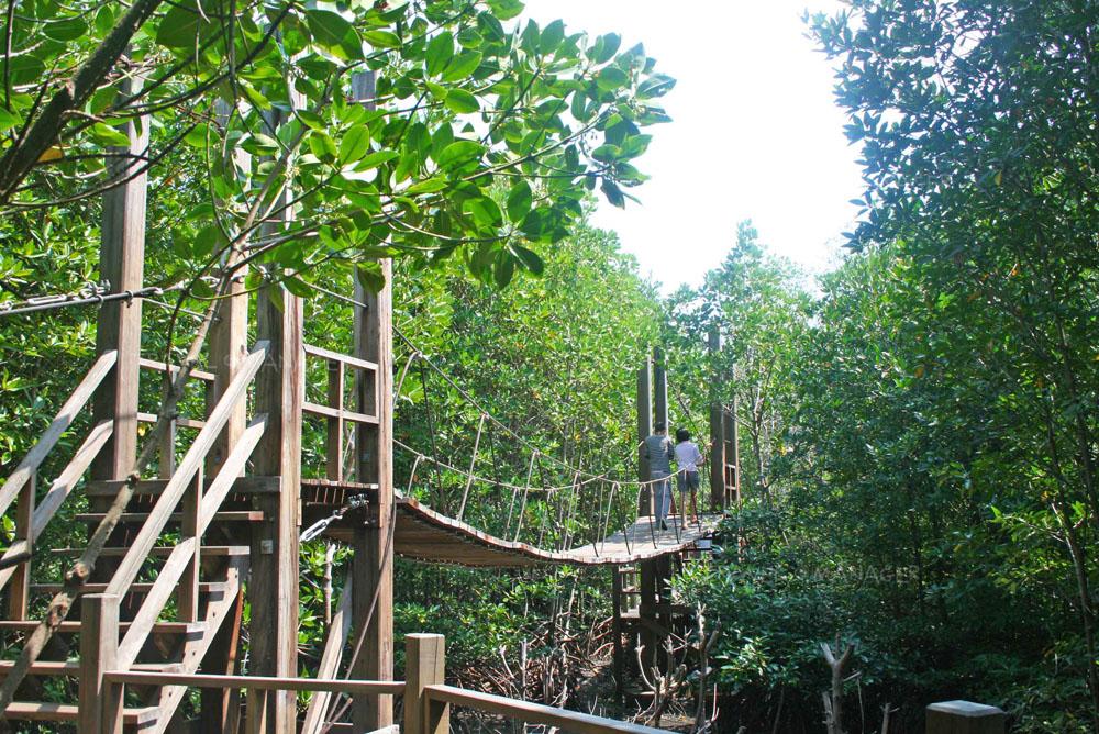 สะพานแขวนระหว่างเส้นทางเดินศึกษาธรรมชาติ