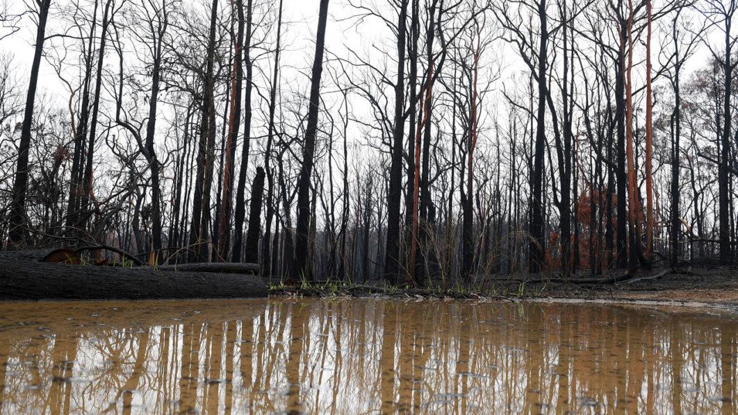 ฝนตกในบางพื้นที่ทางตะวันออกของออสเตรเลีย ช่วยบรรเทาวิกฤตไฟป่า