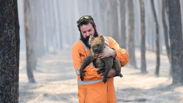 พืช-สัตว์เสี่ยงสูญพันธุ์ได้รับผลกระทบหนักจากไฟป่าออสเตรเลีย
