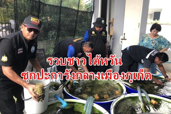ศูนย์อนุรักษ์ทรัพยากรทางทะเลรวบชาวไต้หวันซุกปะการังเพียบ