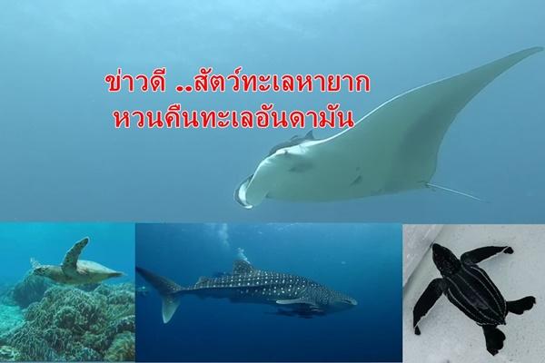 สุดยอดข่าวดี ! เมื่อสัตว์ทะเลหายากหวนคืนถิ่นทะเลอันดามัน