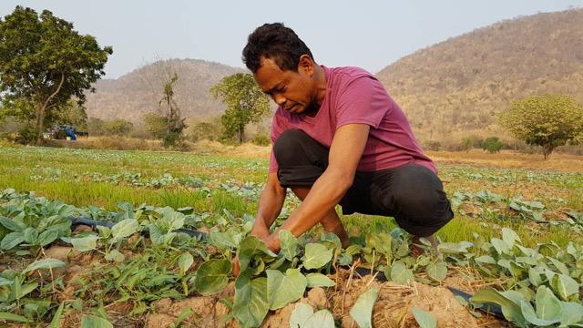 เกษตรกรชัยนาท ไม่ยอมแพ้ปลูกคะน้าบริเวณตีนเขา หารายได้สู้ภัยแล้ง