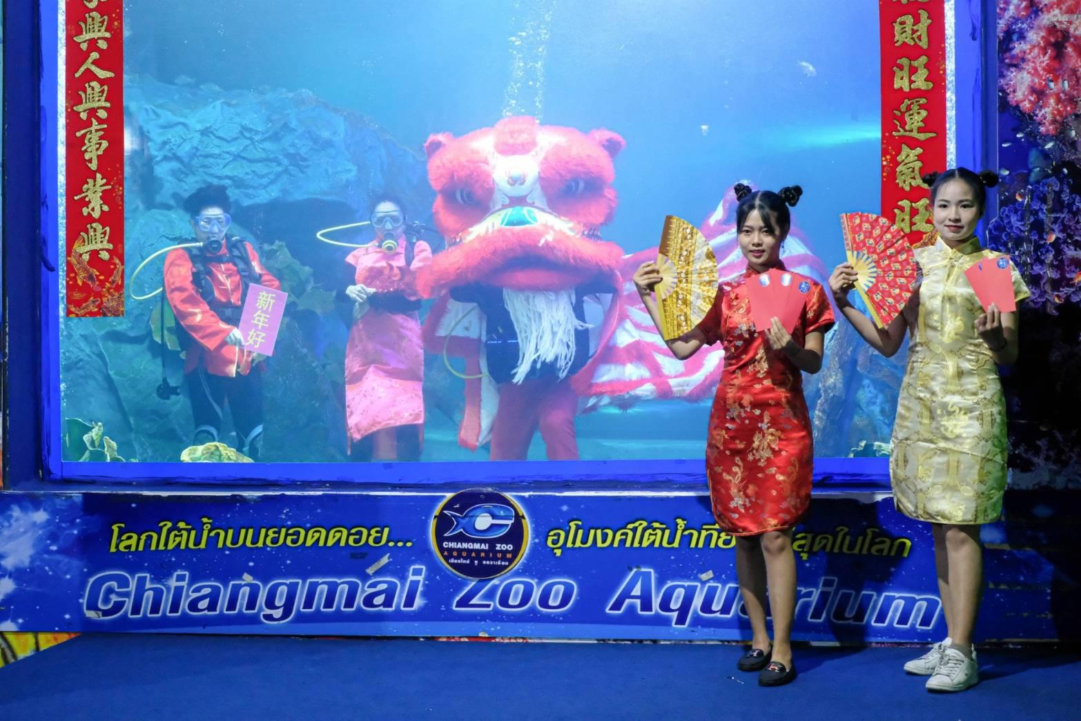 สุดเก๋! เชียงใหม่ซูอควาเรียมจัดเชิดสิงโตใต้น้ำทะเลบนยอดดอย โชว์ฉลองตรุษจีนตลอดช่วงเทศกาล