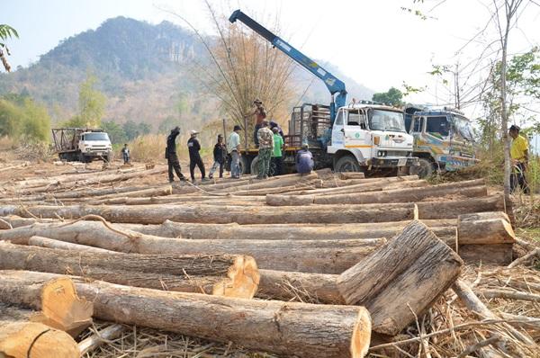 ป่าไม้เมืองกาญจน์ ชี้รัฐเสียหายกว่า 3 ล้านบาท