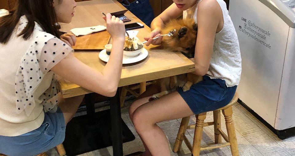วิจารณ์แซด! สาวใช้ช้อนในร้านอาหารป้อนหมา อ้างก็น้องอยากกินอะค่ะ