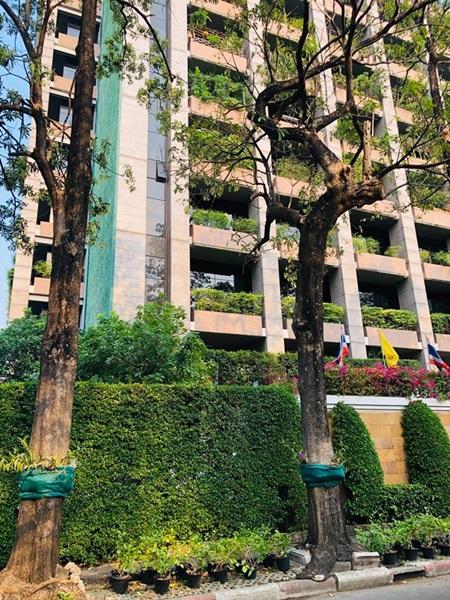 """ม.มหิดล ชี้คนกรุง ชุมชนเขตเมืองใหญ่ """"ปลูกต้นไม้"""" ลดเสี่ยงรับฝุ่นพิษระยะยาว"""