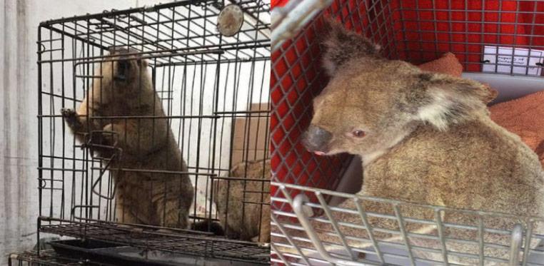 สัตว์ป่า-สัตว์แปลกที่ถูกจับใส่กรงขายที่ตลาดหัวหนาน (ภาพ : www.dimsumdaily.hk)