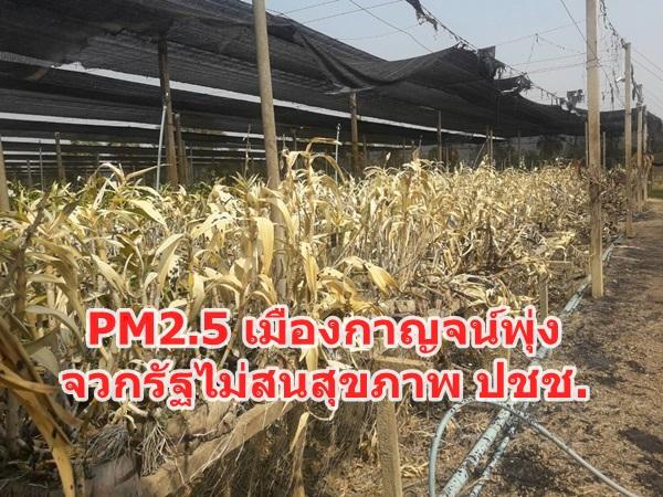 PM2.5 เมืองกาญจน์พุ่ง ชาวกาญจน์ ติงภาครัฐนิ่งเฉย ไม่สนสุขภาพประชาชน
