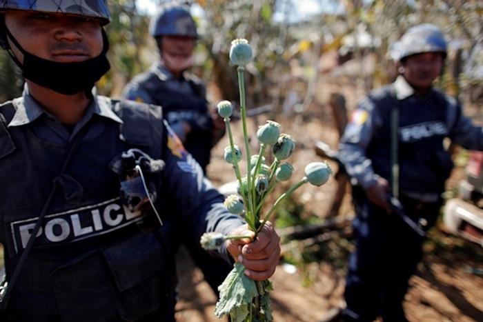 (ภาพจากแฟ้ม) เจ้าหน้าที่ตำรวจพม่าถอนต้นฝิ่นที่ถูกใช้ผลิตฝิ่น