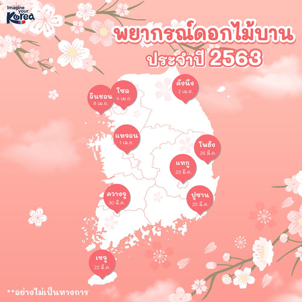 พยากรณ์ซากุระเกาหลี (ข้อมูลจาก KTO Thailand)