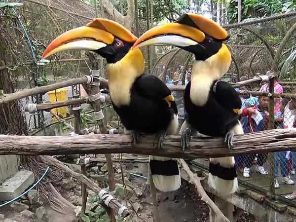 """สวนสัตว์สงขลาจัดกิจกรรม """"วันรักษ์นกเงือก"""" สัญลักษณ์แห่งรักแท้รับวาเลนไทน์"""
