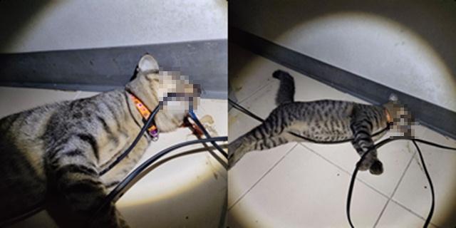 เตือนภัยทาสแมว! ปล่อยอยู่บ้านลำพังกัดสายไฟตู้เย็นขาด ช็อตตายคาที่