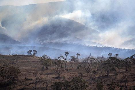 ออสเตรเลียประกาศควบคุมไฟป่าในรัฐนิวเซาท์เวลได้แล้ว