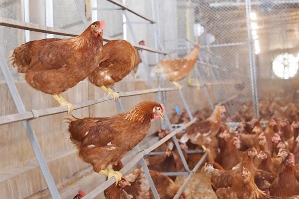 ซีพีเอฟยึดหลักสวัสดิภาพสัตว์สากล ผลิตอาหารมั่นคง-ปลอดภัยยั่งยืน