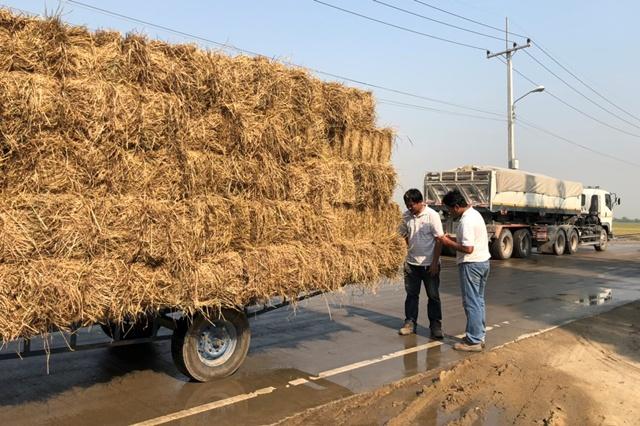 การชั่งน้ำหนักและการรับซื้อฟางข้าวจากเกษตรกร