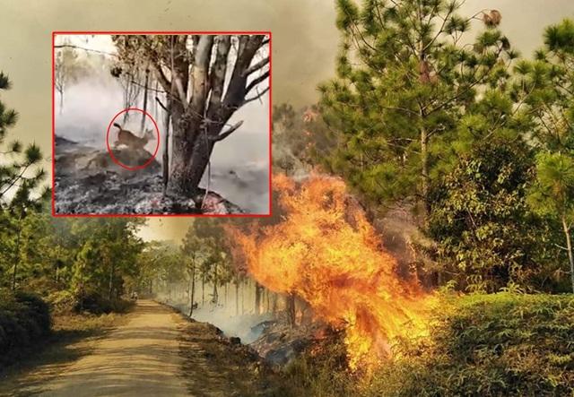 สลด! คลิปกวางน้อยหนีไฟไหม้ภูกระดึง พลเมืองดีหวังช่วยให้ปลอดภัย ก่อนวิ่งหายไปในป่า