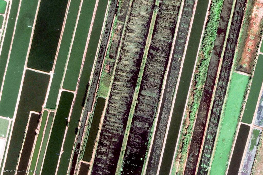 """ภูมิใจประเทศไทย """"บ่อปลา"""" บางปะกง ติดหนึ่งใน """"Google Earth View"""" จากนับพันภาพทั่วโลก"""