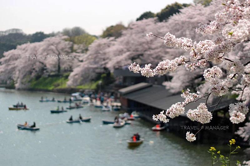 ญี่ปุ่นหนึ่งในประเทศสุ่มเสี่ยงติดไวรัส โควิด-19 สธ. เตือนให้คนไทยงดเดินทางไปชั่วคราว